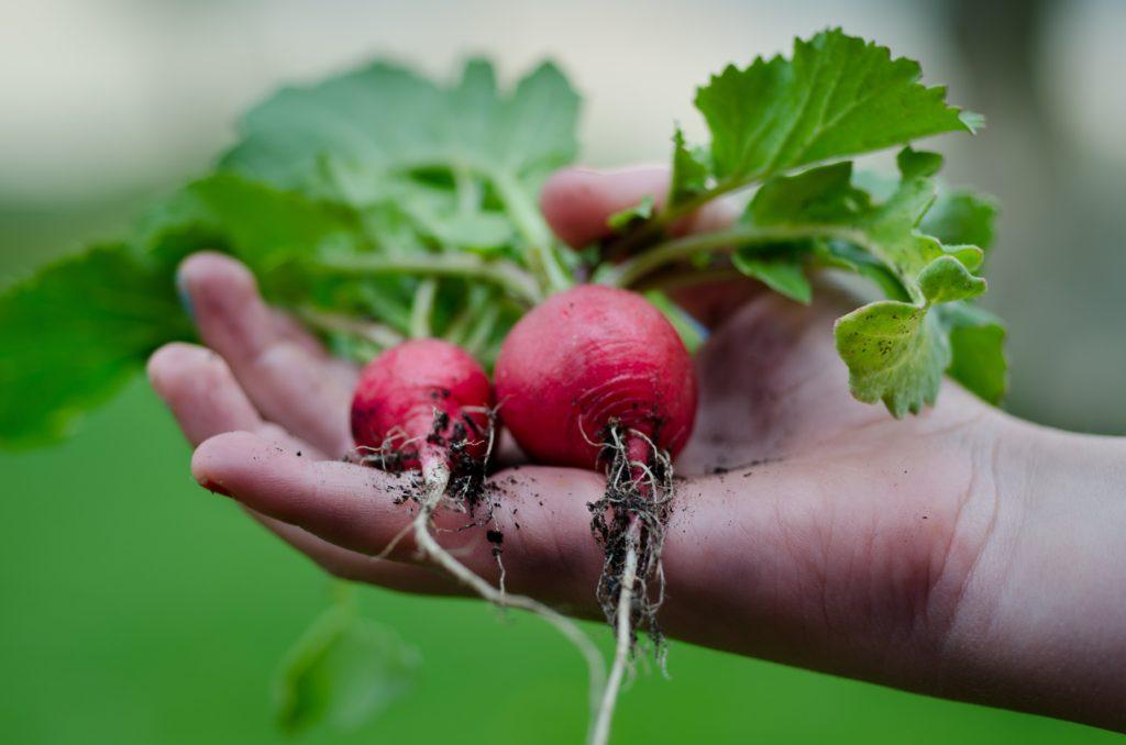 légumes alimentation saine